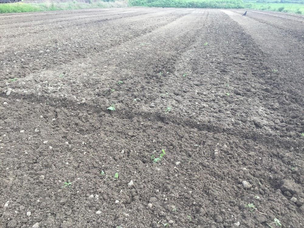 雑草のない畑の作り方