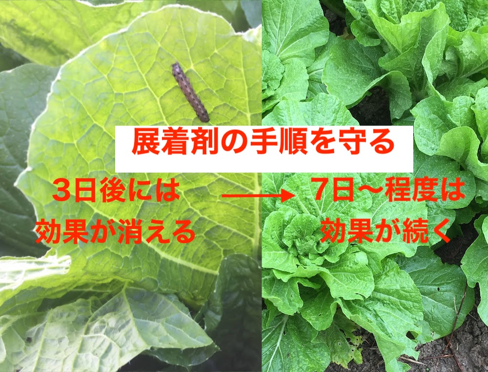 展着剤の作り方をマスターすると、減農薬で野菜を作れます。