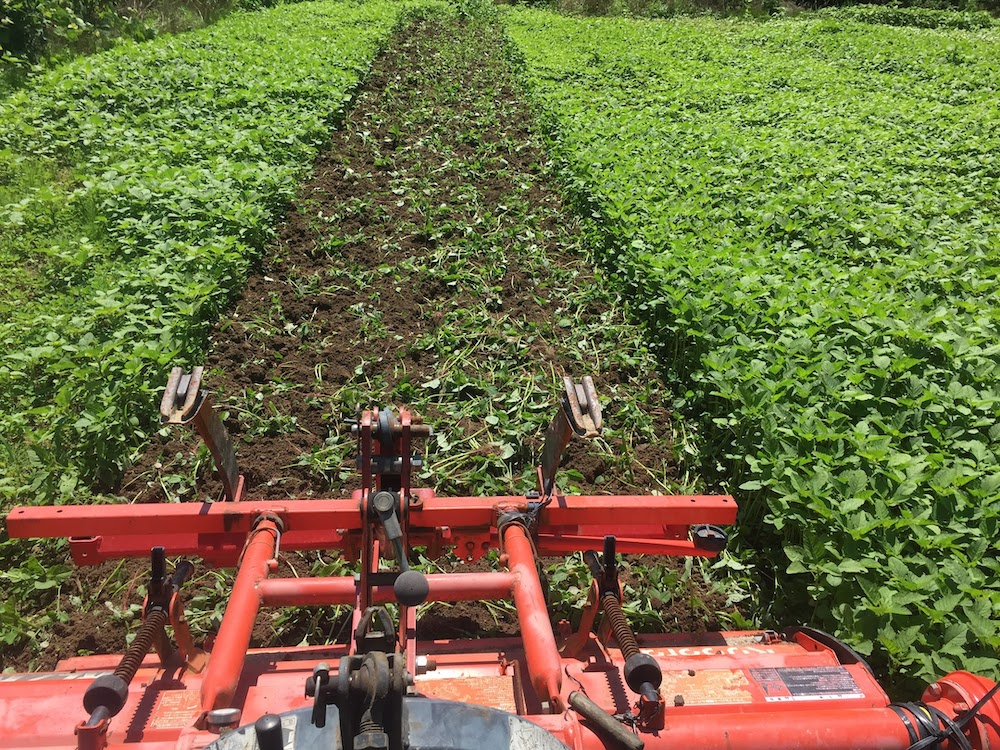 雑草をすき込んで堆肥化する。