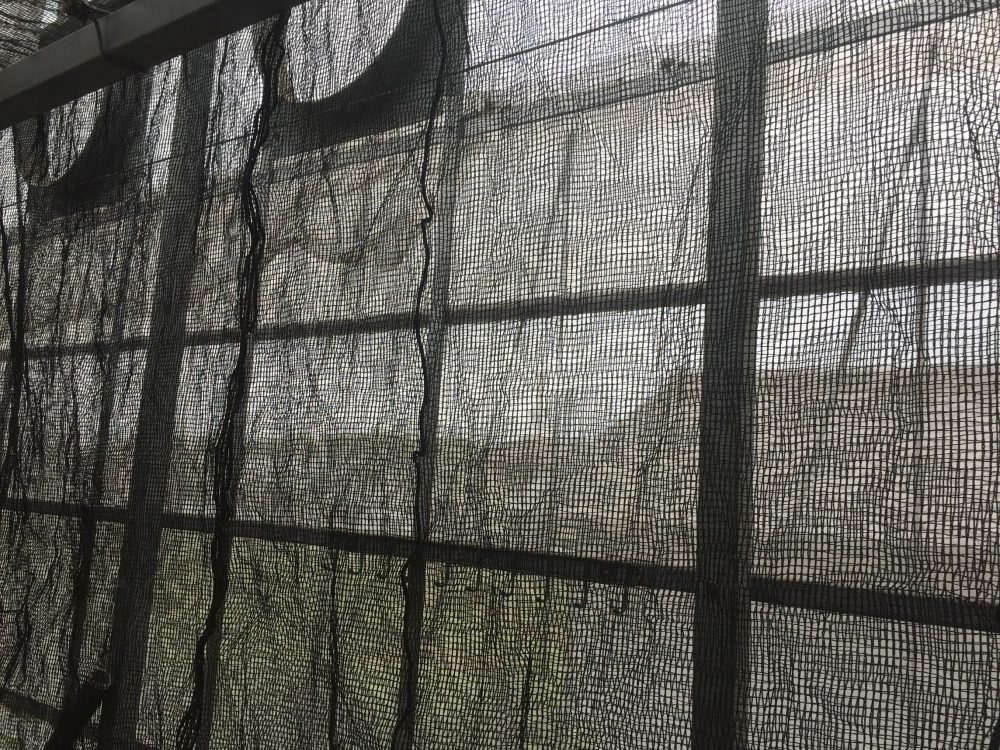 ビニールハウスの暑さ対策の遮光ネット。南側の妻面にも、効果は大きい。