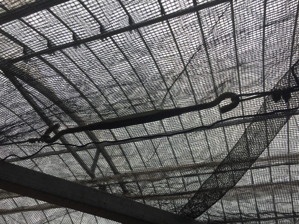 ビニールハウスの暑さ対策の遮光ネット。