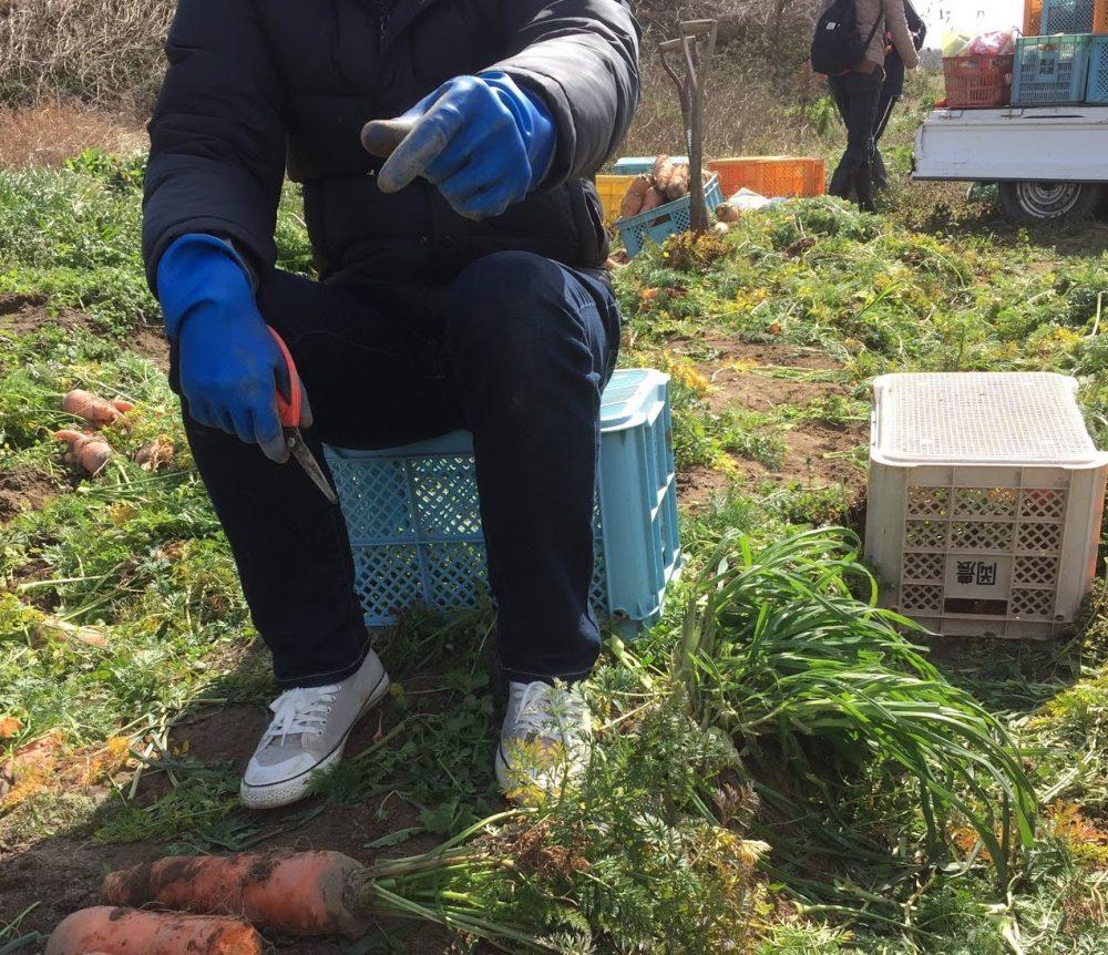 収穫祭では手がかじかむので、このような厚手のゴム手袋なんてオススメです。
