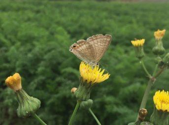 コナガとモンシロチョウ意外にもたくさんの虫が住んでいます。