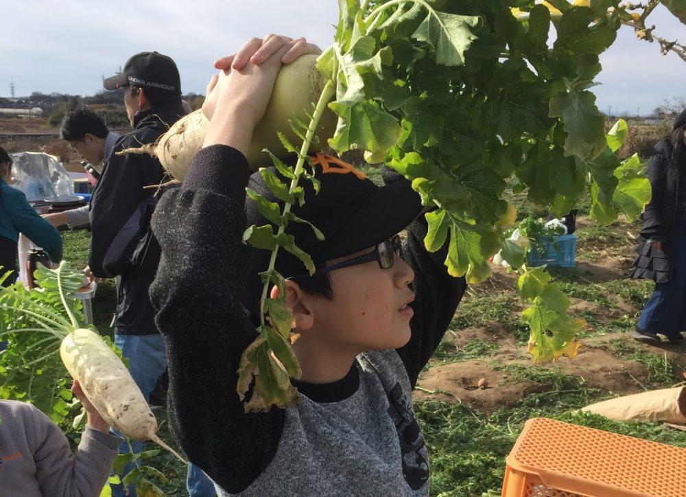 収穫祭で抜いた大根の大きさで勝負!