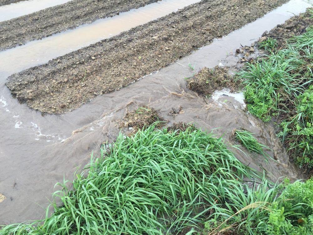 排水路につなげることが、畑の水抜きに最重要なポイントです。
