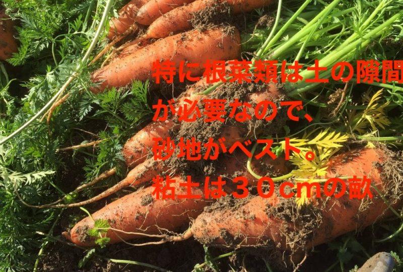 特に根菜類は土の隙間が必要なので、堆肥を混ぜた上で畝の高さを30cmにします。