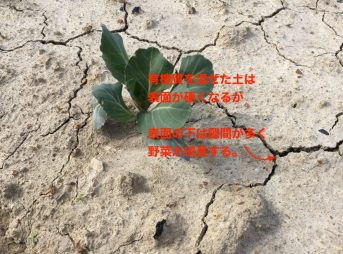 有機質を混ぜても、表面は硬くなるが、土の中は柔らかく隙間が増える