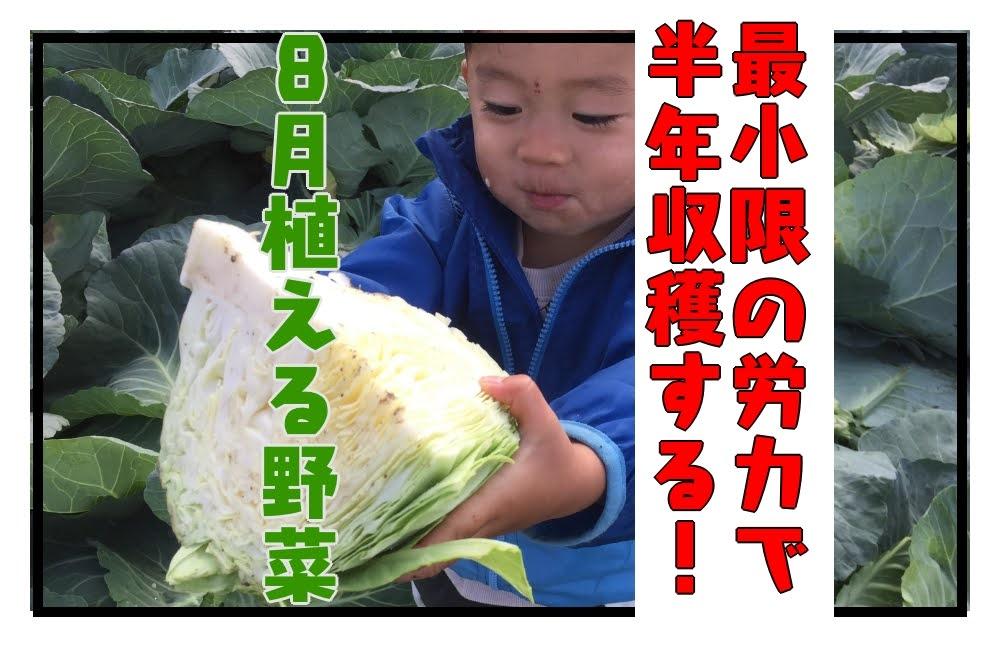 8月に植え付けする野菜に着目して、半年収穫を続けよう