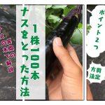 茄子の1番花も収穫して、1苗から100本収穫するための栽培方法