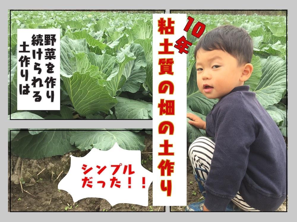 粘土質の硬い土を野菜ができるふかふかの土にした方法