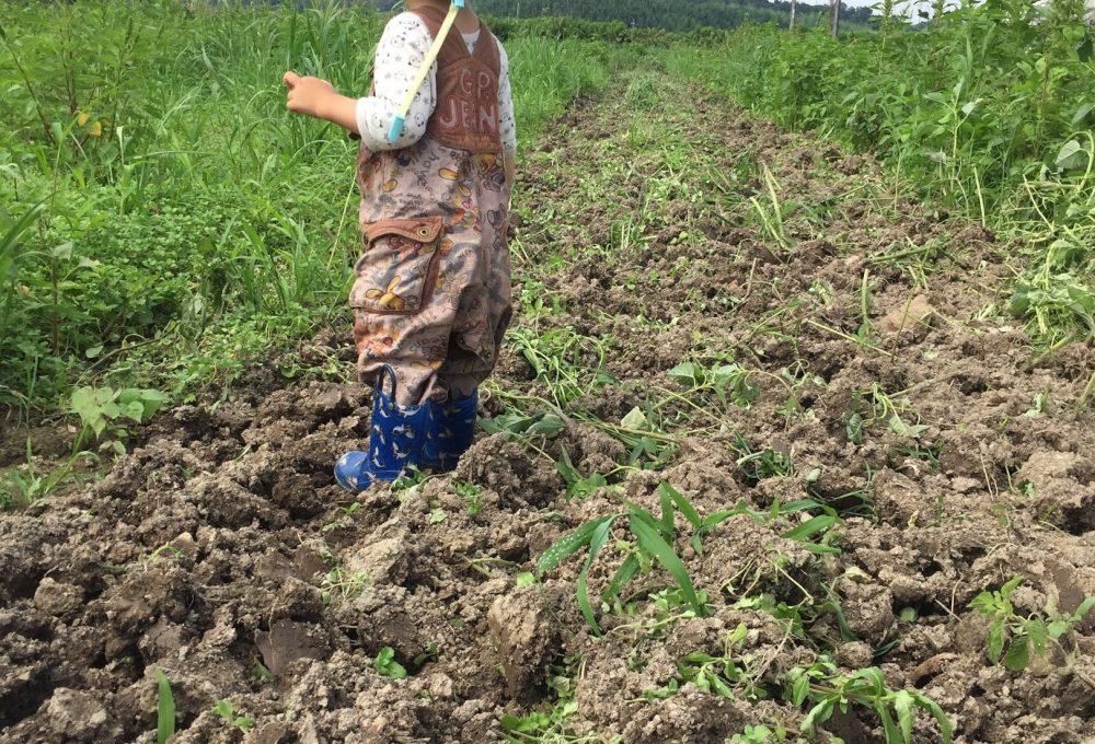 市民農園があれば、畑を借りたい。