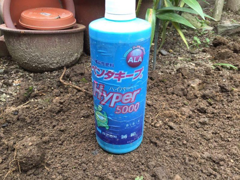 マリーゴールドの摘芯した後の液肥は、いちろうはペンタキープを使っています。とても効果が高く、変に効きすぎることもない。