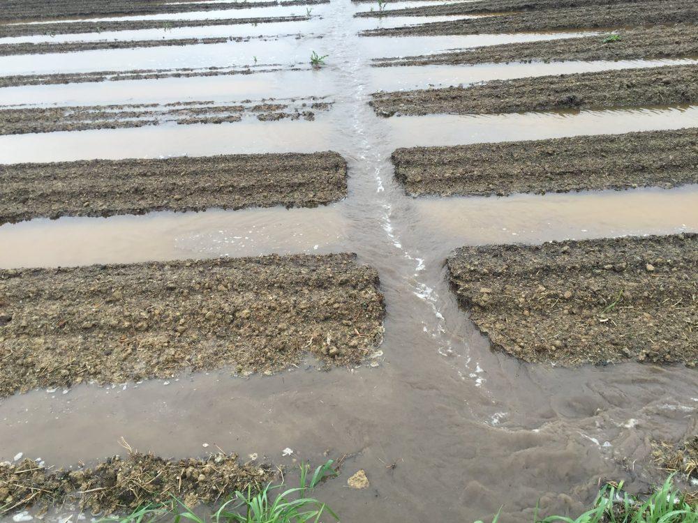 畑の畝の周りに水が溜まる場合は水路を横断させます。