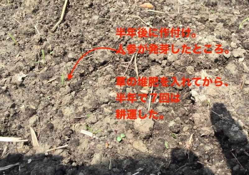 草の堆肥を入れてから半年後に作付け。7回は耕運した。人参は無事発芽し、長いものが取れた。
