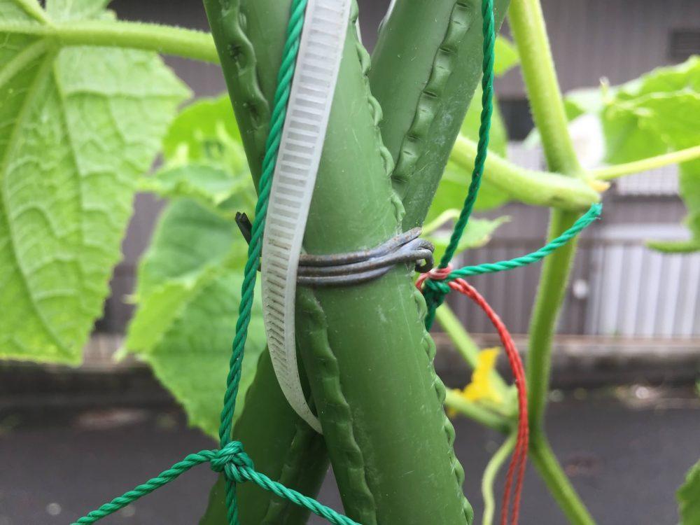 針金でキュウリの支柱同士をギュッと固定します。