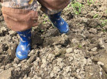 1回目に耕した時の土。この土がタイミング次第で変わります。