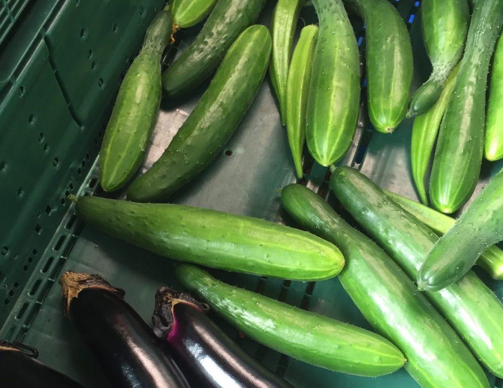 長ナスときゅうりは夏野菜の定番。家庭菜園で必ず3株ずつは作ります。