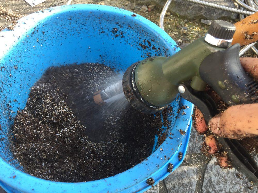 タキイの種まき培土をベチョベチョになるまで水を入れて混ぜます。