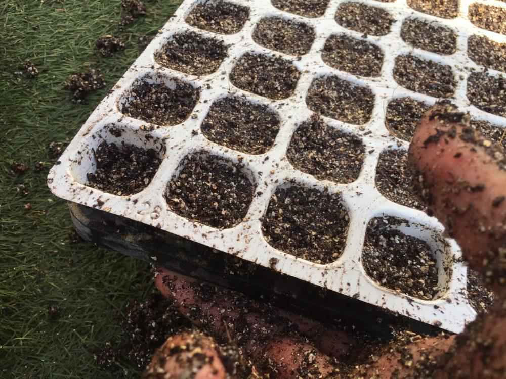 セルトレイをトントン揺さぶります。隙間があれば土を追加します。