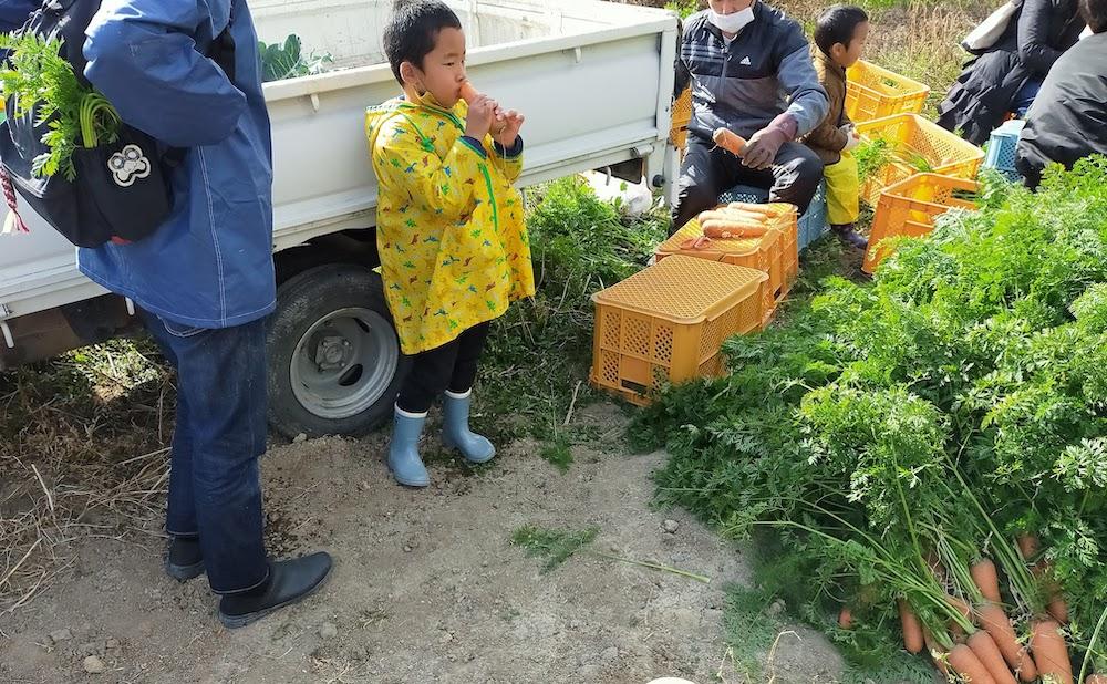 畑に遊びに来た子どもたちは常に甘い人参を食べ続けています。