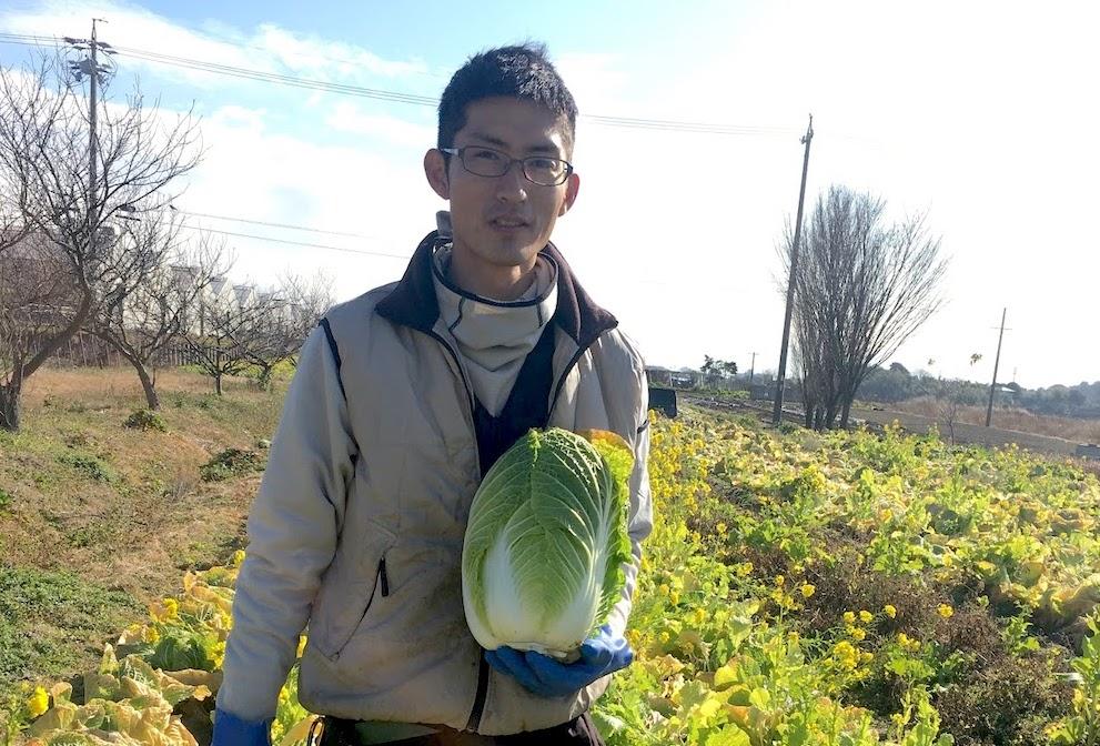 美味しいハクサイを収穫するための栽培方法