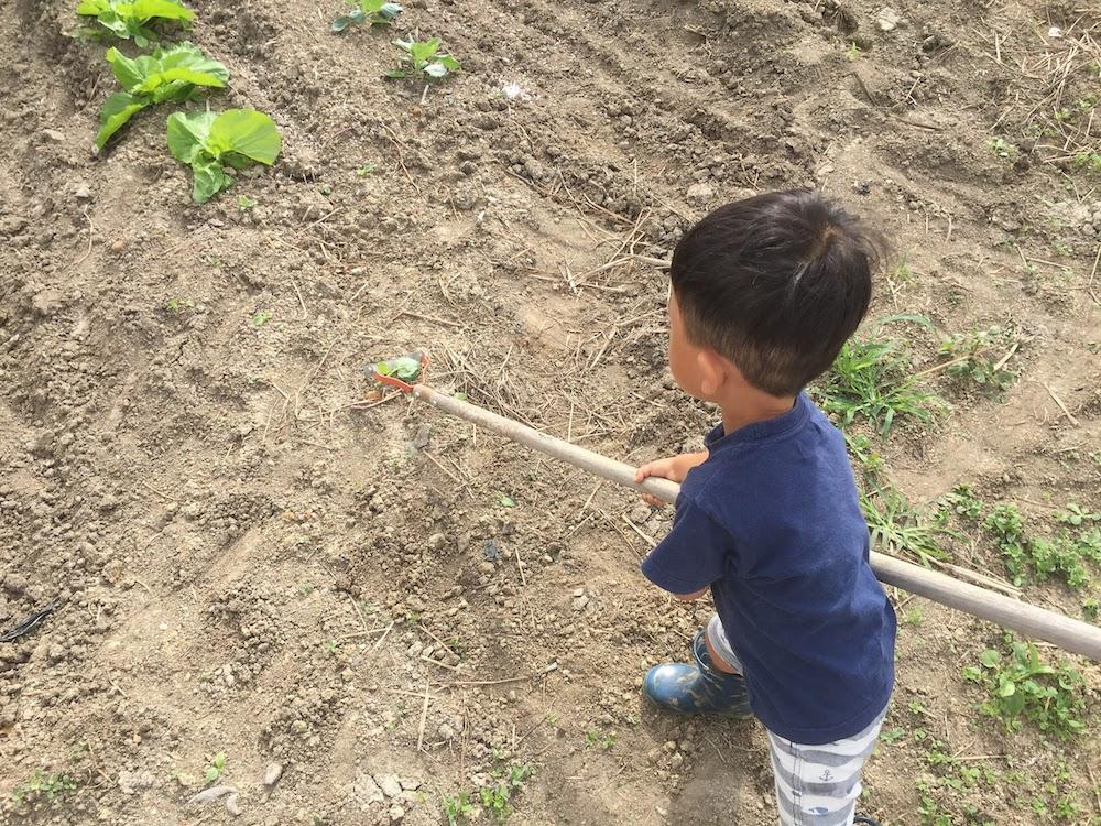 2歳の子供でもできるくらい軽い力でできるのは、土寄せの後だから土が柔らかい