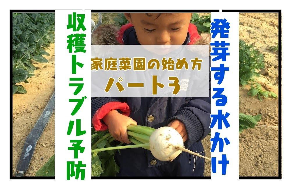 家庭菜園の始め方、収穫トラブル、発芽する水かけ