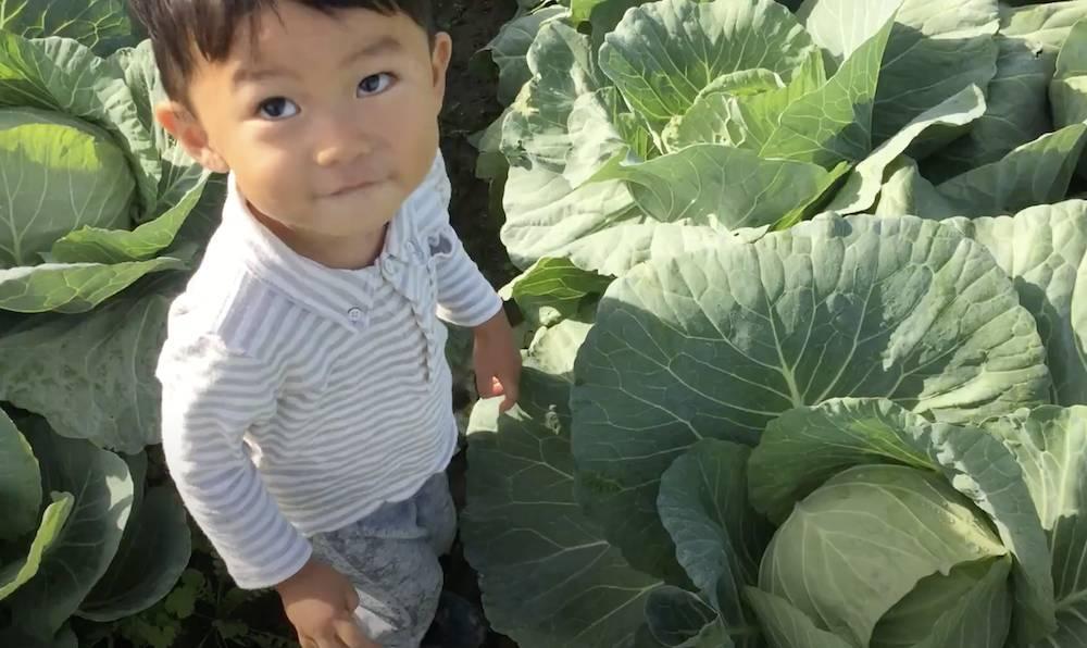 家庭菜園を始めて、このサイトのおかげで上手に野菜ができました!