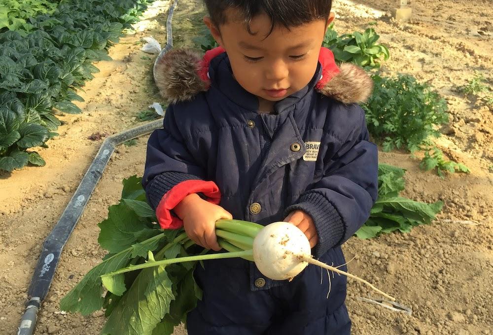 家庭菜園を始めて、初収穫まで行こう