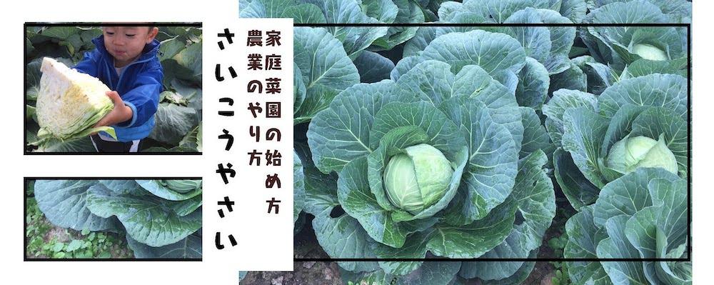 家庭菜園の始め方、農業のやり方を、プロの現場で働く農家が家庭菜園向けに解説しているブログです。