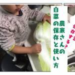 農家さんの白菜の使い方、保存方法