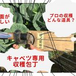 キャベツを収穫する専用の包丁