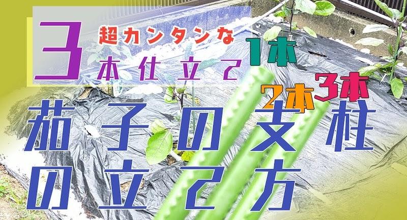 ナス栽培の支柱の3本仕立ての立て方
