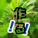 世界一栄養のある野菜づくり。生姜の栄養価をあげる